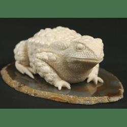 Жаба необыкновенная
